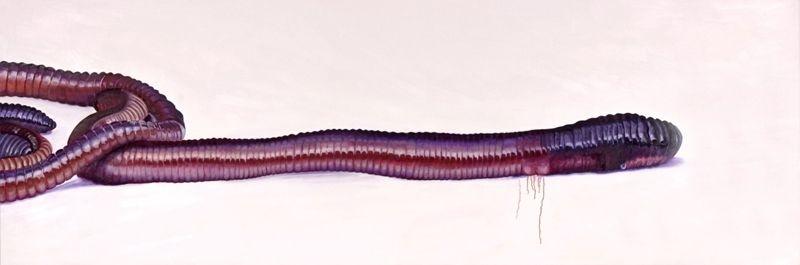Regenwurm-I-2004-Ol-Lwd-100x300cm
